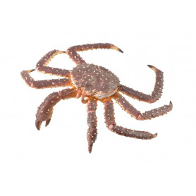 Collecta 88851 Crabe Royal