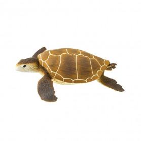Safari 202329 Green Sea Turtle