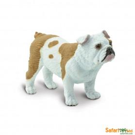 Safari Safari 250729  Bulldog Bulldog