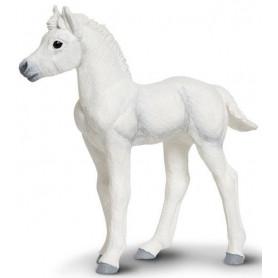 Safari 150605 Palomino foal