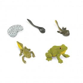 Safari 269129 Lebenszyklus des Frosches Set