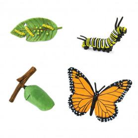 Safari 622616 Cycle de vie - Papillon Monarque