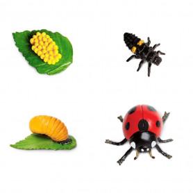 Safari 662816 Lebensyklus eines Marienkäfers