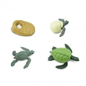 Safari 662316 Life Cycle of a Green Sea Turtle