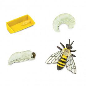 Safari 622716 Lebenszyklus der Honigbiene