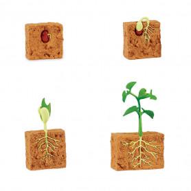 Safari 662416 Levenscyclus van een Bonenplant