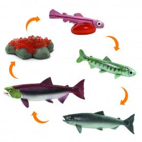 Safari 100267 Life Cycle of a Salmon