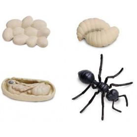 Safari 663916 Lebenszyklus der Ameise