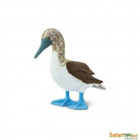 Safari 150529 Blue Footed Booby