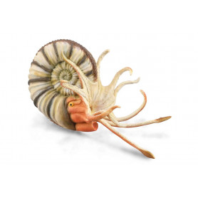 Collecta 88902 Pleuroceras Ammonite