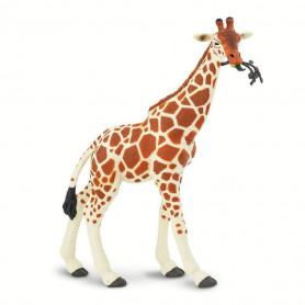 Safari 268429 Reticulated Giraffe